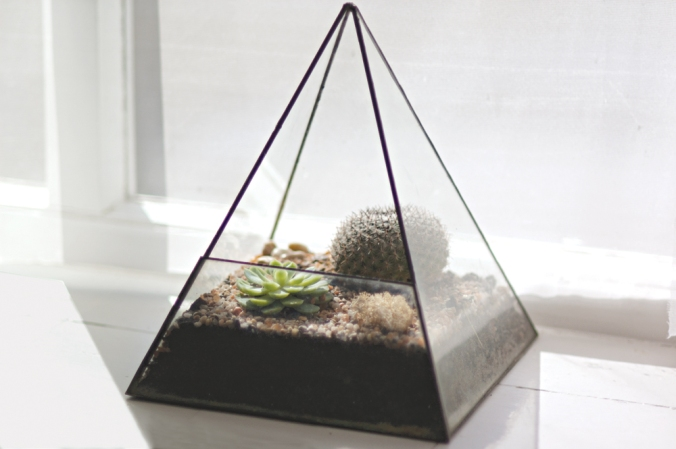 Cinderwood terrariums