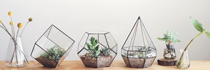 Cinderwood terrariums