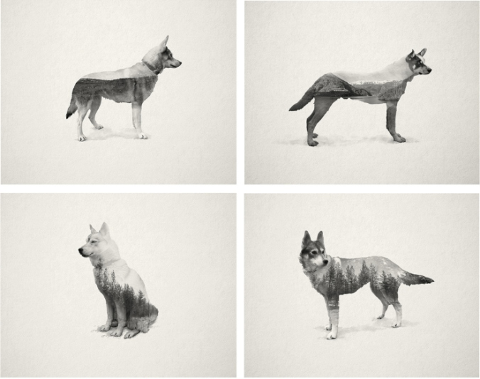 The Ghost Dog Series by Stevo