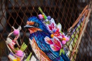 danielle-clough-bird-4